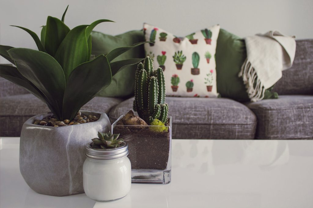 Succulents and cacti​
